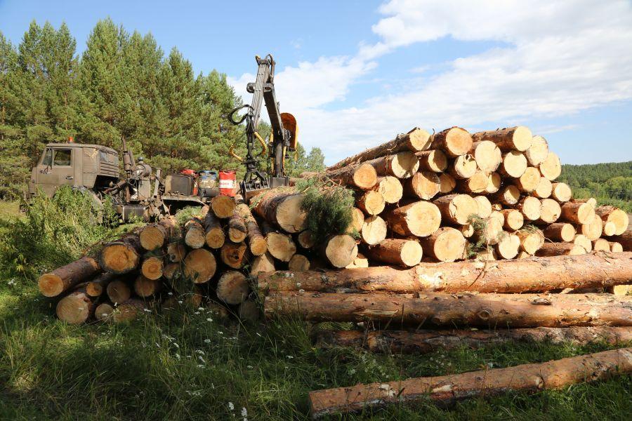 В Абанском районе Красноярского края незаконно вырубили леса еще на ₽110 млн