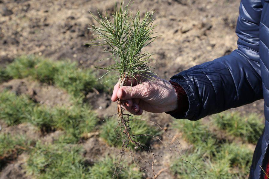 ВКрасноярском крае вдвое увеличат масштабы восстановления лесов
