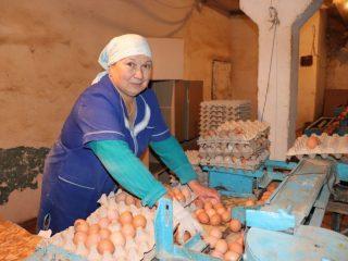 Боготольская птицефабрика, что находится в деревне Владимировка, дает работу сотне жителей района и специализируется на производстве куриных яиц – отсюда их отправляют в торговлю 30-40 млн ежегодно. Галина Макарова 20 лет работает птичницей