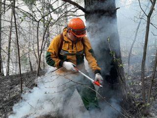 Ежедневно в лесах края возникают 30-60 возгораний