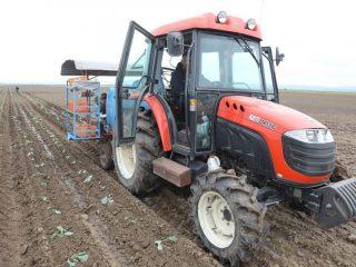 Высаживает саженцы капусты специально приобретенная для этого рассадопосадочная машина