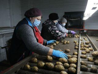 В этом году более 1,4 млн рублей получил березовский  кооператив «Овощевод», чтобы компенсировать затраты на покупку оборудования для выращивания овощей, а также на их закупку у пайщиков кооператива