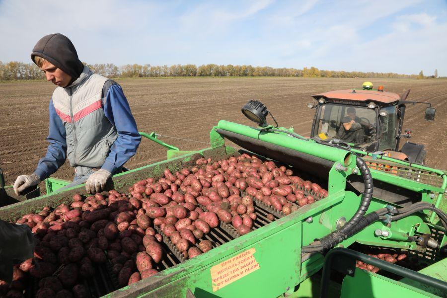 За год в Красноярском крае больше всего подорожали капуста и картошка