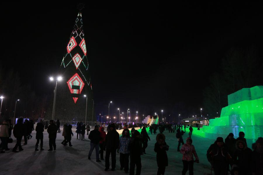 Красноярская ель остается самой высокой в России | Наш Красноярский край