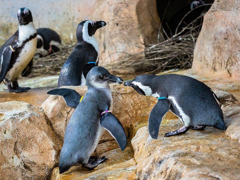 Пингвины парка «Роев ручей» открыли купальный сезон