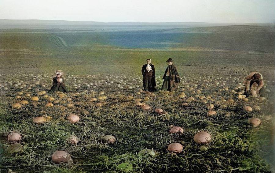>Уникальные фотографии об истории садоводства в Минусинской котловине демонстрируются на выставке