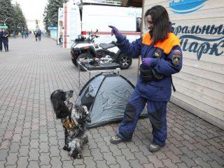 Собаки тоже служат