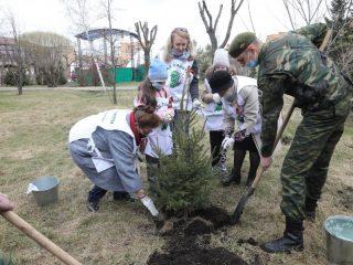 В ходе празднования 76-летия Великой Победы в Красноярском крае высадят более 21 тысячи деревьев и кустарников