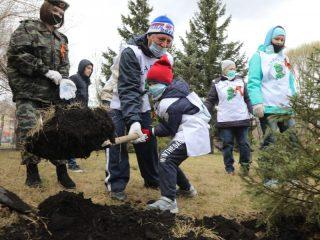 Создание зеленых памятников всем, кто погиб в годы войны, уже стало настоящей народной традицией, объединяющей поколения. В прошлом году в нашем крае жители высадили более 152 тысяч деревьев