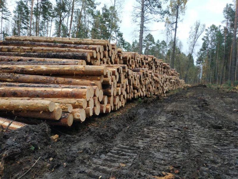 Красноярским лесом заинтересовались предприниматели Германии
