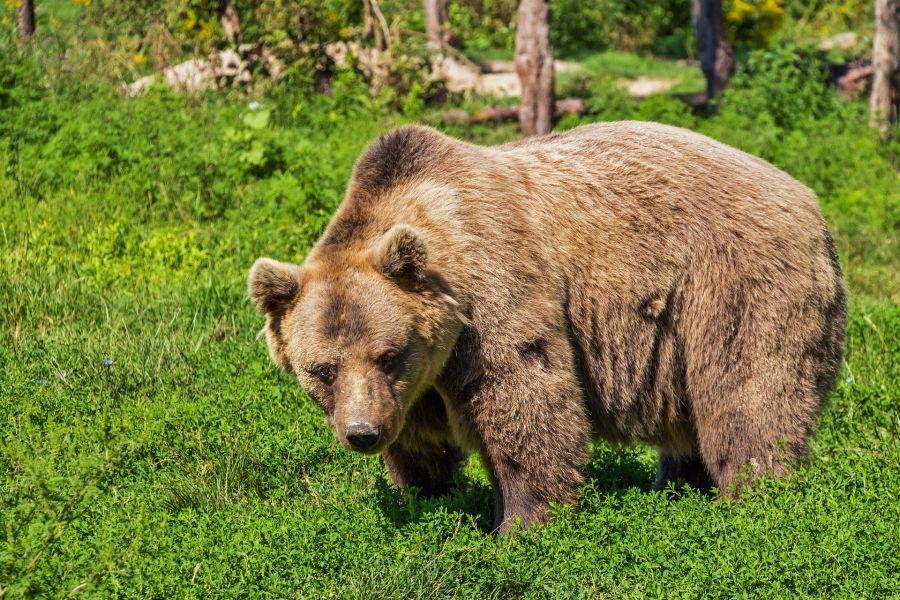 В нацпарке «Ергаки» Красноярского края при нападении медведя погиб подросток