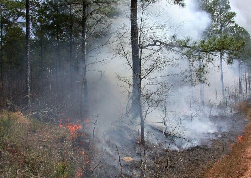 Четыре лесных пожара бушуют в Красноярском крае
