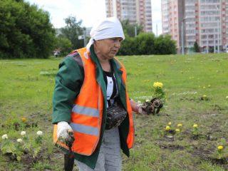 По гарантии заменили более 800 зеленых насаждений, в том числе серебристых тополей и рябин