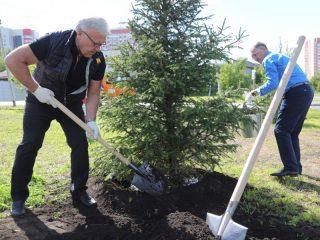Александр Усс внес свой вклад в озеленение Николаевского проспекта, высадив сибирскую ель