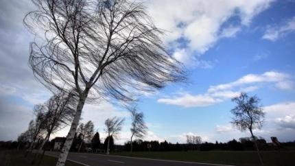 На севере края прогнозируются порывы ветра
