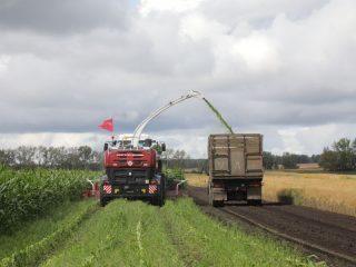 Кукуруза в крае выращивается на корм скоту. Поступившие в регион новые комбайны позволяют измельчать кукурузу в съедобную массу сразу во время уборки