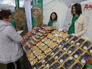 У «Даров Малиновки» можно приобрести не только традиционные картошку и морковку, но и фиолетовые корнеплоды, выведенные местными селекционерами