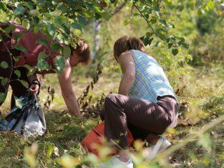 В Татышев-парк началось паломничество любителей яблок