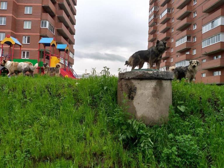 В Красноярске ищут четвертого подрядчика для отлова собак