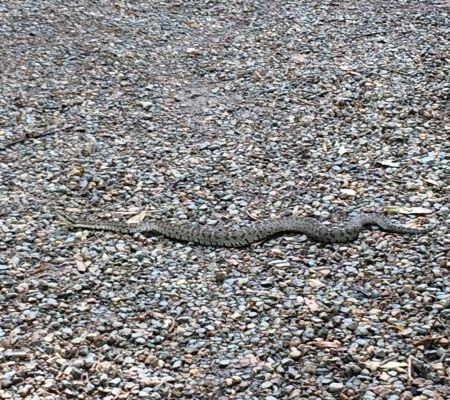 Спасатели предупредили красноярцев о змеях на «Столбах» и в парке «Гремячая грива»