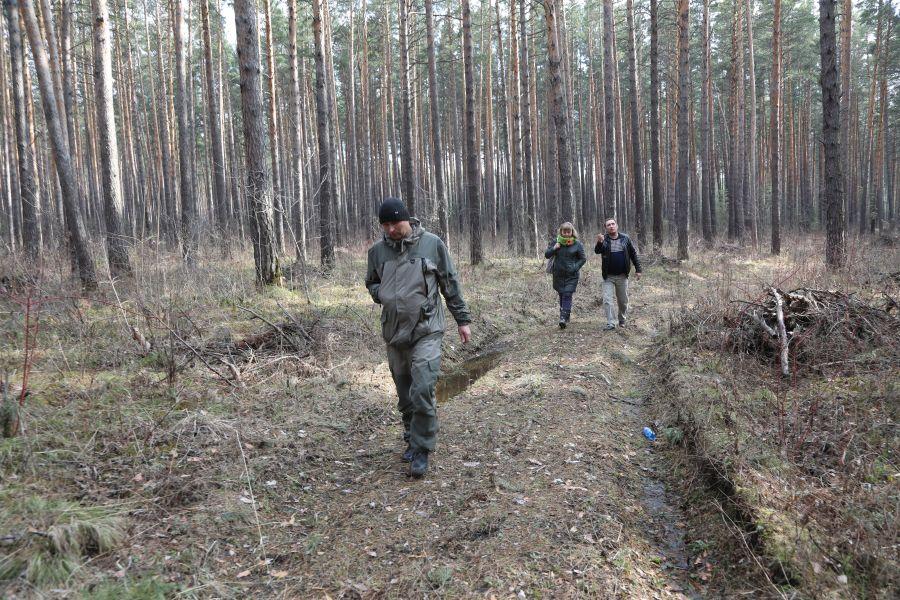 Спорный участок леса вычеркнули из гослесфонда? | НКК