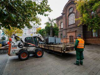 Красноярские пальмы и туи уезжают с улиц в оранжерею. Значит, зима близко