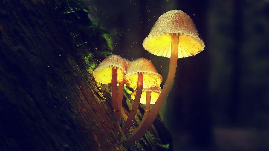 «В центре Мира» Красноярска появится «Волшебный лес»