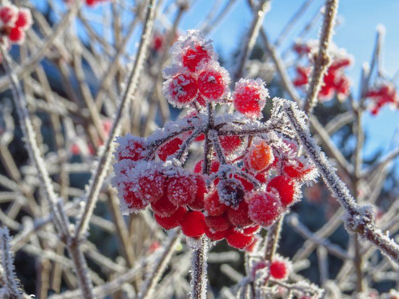В Красноярске в ближайшие дни прогнозируют заморозки до -3
