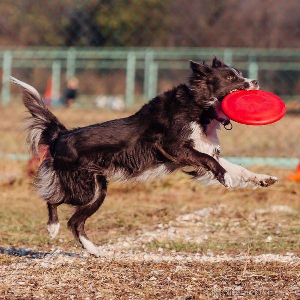 В Татышев-парке пройдут соревнования летающих псов